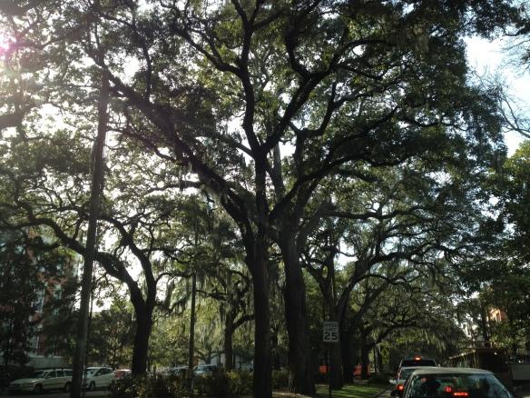 Overalt var der lange alleer med de store flotte ældgamle træer